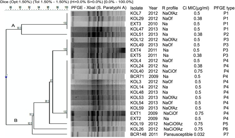 Dendrogram showing the cluster analysis of 24 S. Paratyphi A isolates from Kolkata, India, 2009–2013, by Xba I-PFGE. Band comparison was performed by using the Dice coefficient with 1.5% optimization (Opt) and 1.5% position tolerance (Tol). Pan-susceptible, susceptible to all 17 drugs tested; Na, nalidixic acid; Ci, ciprofloxacin; Of, ofloxacin; Az, azithromycin.
