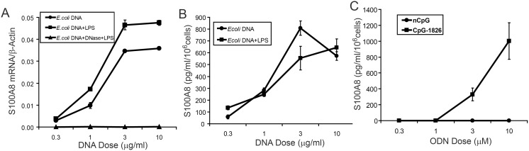Induction of S100A8 by CpG-DNA is dose-dependent. (A) RAW 264.7 macrophages were incubated with E. coli DNA at the indicated concentrations ±0.3 ng/ml LPS for 24 h before harvesting and (A) mRNAs quantitated by qRT-PCR with different doses of DNase-treated E. coli DNA ± LPS (0.3 ng/ml) as control. (B) S100A8 levels in culture supernates from (A) were quantitated by ELISA. Other controls included various concentrations of placental DNA ± LPS (0.3 ng/ml) or DNase-treated E. coli DNA, but mRNA levels were same as control and proteins were below the detectable level (not shown). (C) S100A8 in supernates from RAW cells treated with synthetic nCpG-1982 or CpG-1826 at the indicated concentrations was quantitated. QRT-PCR data represent means (relative to the γ-actin mRNA levels) ± SD of duplicates and are representative of 3 experiments. ELISA data are means ± SD of duplicate samples from 2 separate experiments.