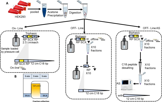 Schematic design workflow for the label-free MudPIT platforms quantification. (A) HEK293 protein lysate was digested and processed in three replicate runs with different MudPIT panels: online (automated panel), offline (manual collection of fractions), and offline-AS (offline with autosampler where fractions were collected manually then cleaned up with C18 stage tip columns before being placed into autosampler). (B) Offline fractions were collected for 5 min after the volatile salt pulse phase using 10–100% ammonium acetate.