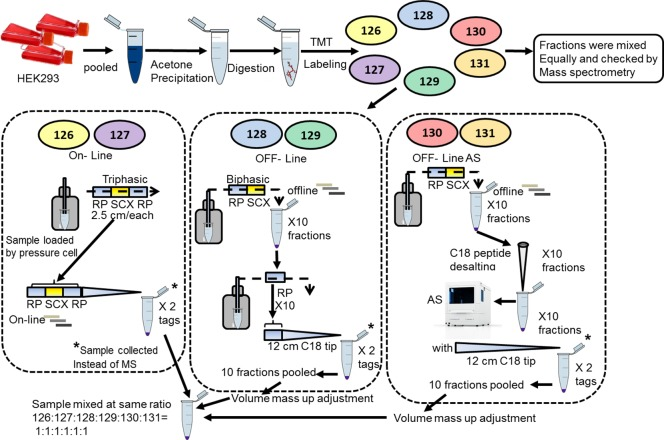 Schematic design workflow for the isobaric tandem mass tag (TMT 6 ) quantification. HEK293 protein lysate was labeled in a sixplex TMT format: 126 and 127 for online MudPit, 128 and 129 for the offline MudPit, and 130 and 131 for the offline with autosampler MudPit (offline-AS). Directly after labeling, an equal volume of the TMT tags was mixed and analyzed to ensure successful labeling (labeling efficiency averaged 97.2%). Samples were then processed with different MudPit platforms, massed up to same volume with 100 mM TEAB, and equally combined into one sample before drying and mass analysis.
