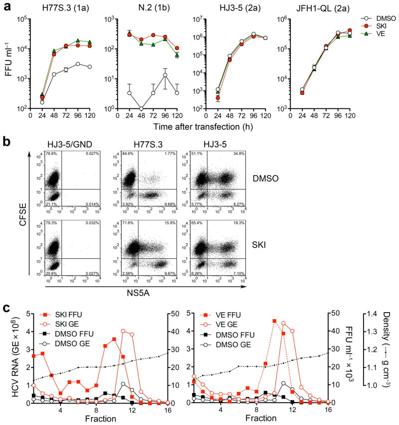 Inhibition of lipid peroxidation by SKI or VE promotes production and spread of infectious genotype 1 HCV. ( a ) Infectious virus yields from Huh-7.5 cells transfected with the indicated viral RNAs and grown in the presence of 1 μM SKI, 1 μM VE or DMSO vehicle. Culture supernatant fluids were harvested and replaced with fresh media containing compounds every 24 h. Infectivity titers are expressed as focus forming units (FFU) ml −1 . Data shown are mean ± s.e.m. from three replicate cultures. ( b ) SKI promotes spread of H77S.3 but inhibits HJ3-5 virus. Cells electroporated with H77S.3 or HJ3-5 RNAs were mixed with carboxyfluorescein succinimidyl ester (CFSE)-labeled naïve Huh-7.5 cells; CFSE/NS5A double-positive cells (upper right quadrant) are indicative of virus spread. ( c ) Buoyant density of H77S.3 virus particles released from H77S.3 RNA-transfected Huh-7.5 cells grown in 1 μM SKI (left) or 1 μM VE (right) vs. DMSO control. Fractions from isopycnic iodixanol gradients were assayed for infectious virus (FFU) or HCV RNA (GE = genome equivalents). The data shown are representative of two independent experiments.