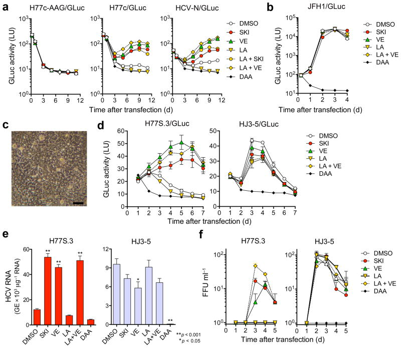 Lipid peroxidation regulates wild-type HCV replication and represses cell culture-adapted virus in primary human liver cultures. ( a ) Effects of SKI, VE (each 1 μM), LA (20 μM), LA + SKI, LA + VE, or a DAA (MK-0608, 10 μM) on replication of wild-type H77c/GLuc or HCV-N/GLuc RNAs, or a replication-defective control (H77c/GLuc-AAG) in Huh-7.5 cells. ( b ) Wild-type JFH1/GLuc RNA was electroporated and treated with drugs as in ( a ) with PSI-6130 (10 μM) as the DAA control. ( c ) Phase contrast microscopy of fetal hepatoblasts at 3 d. Scale bar, 50 μm. ( d ) Human fetal hepatoblasts (HFH) were infected with H77S.3/GLuc or HJ3-5/GLuc viruses in HFH media containing SKI or VE (each 1 μM), LA (50 μM), LA + VE, or a DAA, MK-0608 or PSI-6130 (each 10 μM) and assayed for GLuc. Results represent mean ± s.e.m. from three replicate cultures with cells from two donors. ( e ) HFH were infected with H77S.3 or HJ3-5 (MOI = 0.01) and treated as in d . Cell-associated viral RNA was quantified by qRT-PCR at 5 d (* P