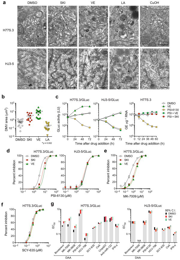 Lipid peroxidation reduces HCV-induced membranous web abundance and alters the EC 50 of DAAs. ( a ) Transmission electron microscopic images of the membranous web in Huh-7.5 cells electroporated with H77S.3 or HJ3-5 RNA and treated with DMSO, SKI (1 μM), VE (1 μM), LA (50 μM), or CuOH (10 μM). Scale bar = 500 nm. ( b ) Quantitation of area occupied by double-membrane vesicles (DMV) within individual cells infected with H77S.3 virus and treated with SKI, VE, or LA as in a . * P ≤ 0.002 vs. DMSO by two-sided Mann-Whitney test. ( c ) SKI and VE mask the antiviral effect of PSI-6130 against H77S.3/GLuc replication. (left) Huh-7.5 cells electroporated with H77S.3/GLuc or HJ3-5/GLuc RNA were cultured for 7 d, then treated with DMSO, 10 μM PSI-6130, 1 μM VE or both PSI-6130 and VE. Culture supernatant fluids were replaced every 24 h and assayed for GLuc activity. (right) Huh-7.5 cells were electroporated with H77S.3 RNA, cultured for 5 d and then treated with DMSO, PSI-6130, SKI or VE, or PSI-6130 plus SKI or VE. Cell-associated HCV RNA was quantified by qRT-PCR. Results represent mean ± s.e.m from two (left) or three (right) replicate cultures. ( d ) Inhibition of H77S.3 (left) and HJ3-5 (right) replication by the NS5B inhibitor PSI-6130 in the presence of SKI or VE (each 1 μM) or DMSO vehicle. Inhibition was assessed by quantifying GLuc secreted 48–72 h after drug addition. Results represent mean ± s.e.m. of two replicate cultures. ( e,f ) Inhibition of H77S.3 replication by ( e ) MK-7009, an NS3/4A inhibitor, and ( f ) SCY-635, a host-targeting cyclophilin inhibitor. ( g ) EC 50 values of representative direct- versus indirect-acting antivirals against H77S.3 (left) and HJ3-5 (right) viruses in the presence of SKI or VE (each 1 μM). Assays were carried out as in panels d–f. Colored bars represent limits of the 95% c.i. of EC 50 values calculated from Hill plots. 'NA' = not measureable due to poor antiviral activity. See Supplementary Fig. 9 for additional details.