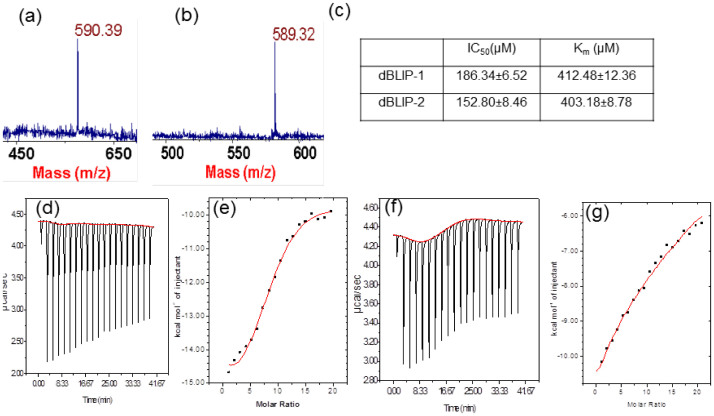 Binding and inhibitory activity of Bacillus cereus 569 β-lactamase (Calbiochem, UK) by using dBLIP-1 and -2. MALDI-ToF Mass spectra of purified dBLIP-1 (a) and dBLIP-2 (b). In vitro study for inhibition (IC50) of β-lactamase activity by dBLIP-1 and dBLIP-2, (c). ITC bonds measurement between dBLIP-1 and 2. Figures show the raw data obtained from ITC binding experiment between β-lactamase with dBLIP-1 (d) and dBLIP-2 (f). Figure representing the integration of raw heat associated data for dBLIP-1 (e) and dBLIP-2 (g). These data have been corrected by subtraction of appropriate blank experiments and then fitted with nonlinear regression; data derived after analysis have been listed in Supplementary Table 1 . The binding thermodynamics for these experiments are listed in the methods section.