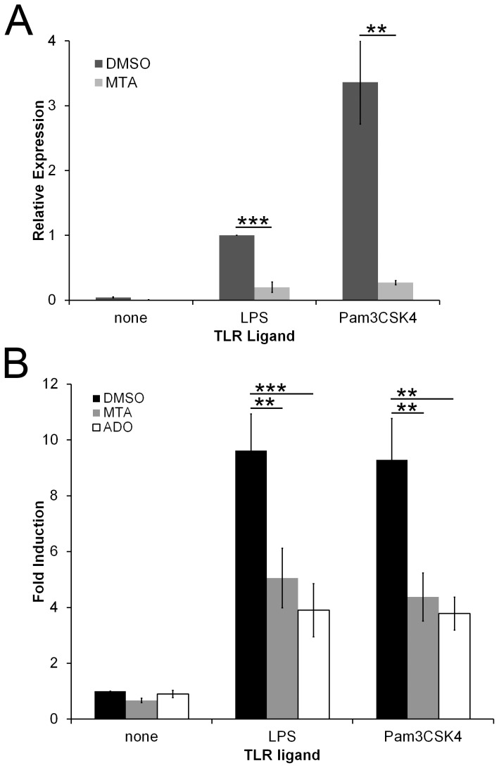 MTA inhibits TLR-induced TNFα mRNA production and NF-KB induction. (A) BMDM were incubated for 4 h with either DMSO or 200 µM MTA in the absence or presence of either 100 EU/mL LPS or 1 µg/mL Pam3CSK4. Total RNA was extracted from cells. TNFα expression relative to β-actin was determined by Δ(ΔCT) method using real-time PCR. (B) RAW NF-KB reporter cells were treated with DMSO, 200 µM MTA or 200 µM adenosine (Ado) in the absence or presence of the indicated TLR ligands for 4 h at 37°C. Supernatants were assayed for luciferase, which was normalized to DMSO-treated cells that received no TLR stimulation. The graphs represent mean ±sem of 4 (A) or 5 (B) experiments. ** p