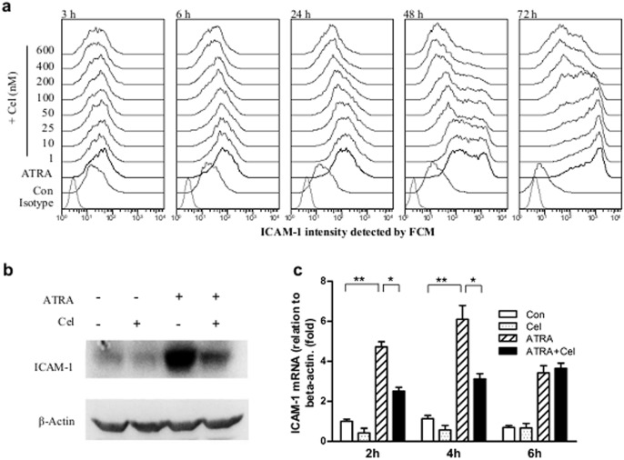 Effects of celastrol on ICAM-1 expressions in ATRA-induced NB4. ( a ) Histograms of ICAM-1 expressions in NB4 cells with different treatments. NB4 cells were treated with celastrol at different doses for 30 min prior to loading 1 µM of ATRA. Cell surface levels of ICAM-1 were detected by flow cytometry at the indicated times after co-culture, with the ATRA loading time as the starting point. ( b ) Western blot detection of total amount of ICAM-1 in cells. NB4 cells were pre-treated with celastrol at 200 nM for 30 min, then 1 µM of ATRA loaded. The culture process continued for 6 hours and then the whole protein was extracted and ICAM-1 detected by Western blot. β-actin was used as internal control. ( c ) Quantitative RT-PCR detection of ICAM-1 mRNA in NB4. NB4 cells were pre-treated with celastrol at 200 nM for 30 min, then 1 µM of ATRA loaded. The culture process continued for the indicated times, after which total RNA was extracted and ICAM-1 mRNA detected with quantitative RT-PCR. β-actin was used as internal control. The data are shown as mean ± SE, * represents P