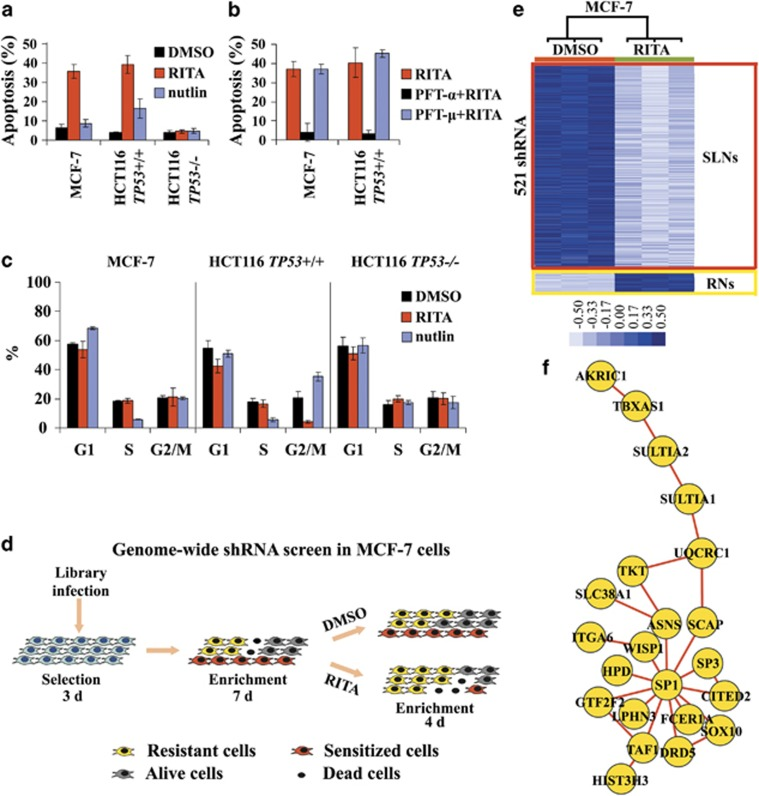 Genome-wide shRNA screen for identifying modulators of p53-mediated apoptosis. ( a and b ) Induction of apoptosis by RITA or nutlin in MCF-7, HCT116 and HCT116 TP53−/− cells, as assessed by FACS of Rho123-PI-stained cells. Apoptosis was assayed also by FACS of Annexin V-PI-stained cells or sub-G1 population detection using PI staining. In each experiment, at least two methods were used, and conclusions were only made when similar results had been obtained with both methods. Detailed results are shown in Supplementary Figure S1B . ( b ) Induction of apoptosis by RITA was halted by blocking the p53 transcriptional activity with PFT- α , 18 but not by blocking the cytoplasmic function of p53 with PFT- μ . 19 ( c ) Effect of RITA and nutlin on cell cycle in MCF-7, HCT116 and HCT116 TP53−/− cells was assessed by FACS using PI staining. ( d ) Schematic representation showing the design of the genome-wide shRNA screen in MCF-7 cells. ( e ) Hierarchical clustering analysis of the shRNA screen data identifies two groups of hits: SLNs and RNs. Light blue indicates low abundance of shRNA (SLNs) and dark blue reflects high abundance (RNs). Rows indicate shRNAs. Raw data were normalized within each shRNA. P