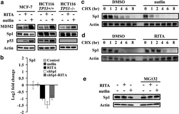 Nutlin decreases Sp1 protein stability in p53-independent manner. ( a ) Protein levels of MDM2, Sp1 and p53 in MCF-7, HCT116 and HCT116 TP53−/− cells with RITA or nutlin treatment were assessed by immunoblotting. ( b ) mRNA level of Sp1 in MCF-7 cells with or without Sp1 depletion on RITA or nutlin treatment was examined by qPCR. Data are presented as mean±S.D., n =3. ( c and d ) MCF-7 cells were pretreated with nutlin ( c ) or RITA ( d ) followed by incubation with cycloheximide (CHX). Cells were collected at indicated time points after CHX treatment. Sp1 levels at different time points were measured by immunoblotting. ( e ) MCF-7 cells were pretreated with proteasome inhibitor MG132 followed by RITA or nutlin treatment, and Sp1 level was assessed by immunoblotting
