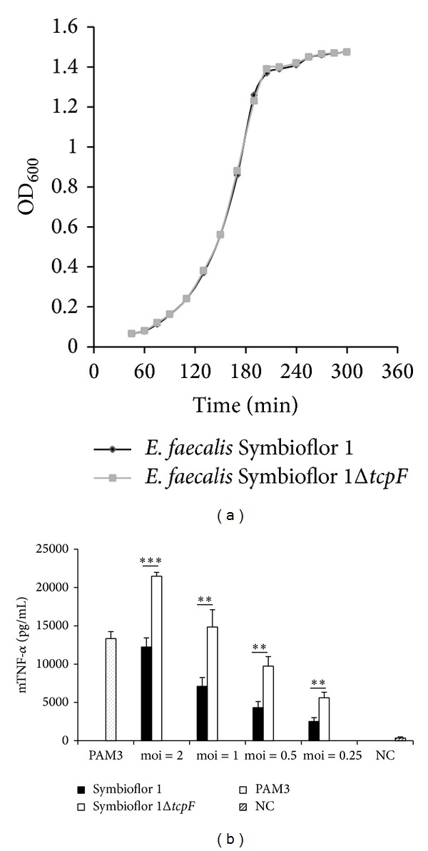 TcpF suppresses TNF- α induction. (a) E. faecalis Symbioflor 1 and its isogenic tcpF deletion mutant Symbioflor 1 Δ tcpF show identical growth rate. Fresh culture was started from overnight culture 1 : 25 in BHI at 37°C and 100 rpm. Optical density at 600 nm (OD 600 ) at indicated time points. (b) RAW264.7 macrophages were infected for 6 h with E. faecalis Symbioflor 1 and E . faecalis Symbioflor 1 Δ tcpF at indicated moi. NC: negative control—uninfected macrophages. Error bars represent s.d. ( n = 4). Student's t -test: ∗∗∗ P