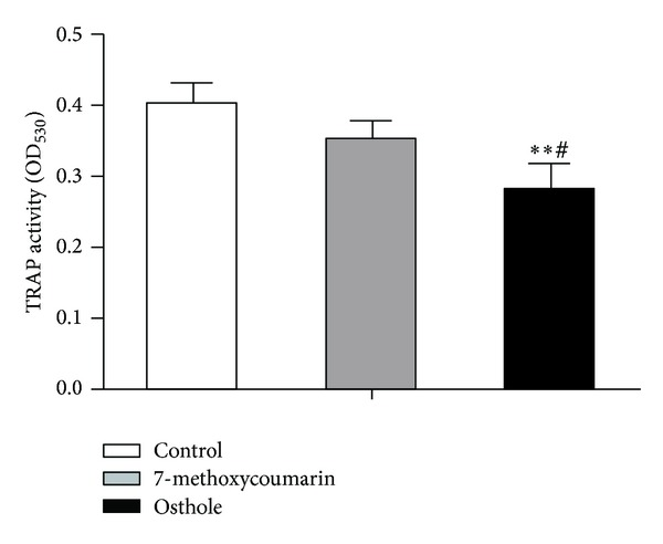 Effects of treatment with 10 −5 M 7-methoxycoumarin or osthole or neither (control) on TRAP activity in cultured rabbit osteoclasts in α -MEM containing 15% FBS and 10 −8 M 1,25(OH) 2 D 3 . TRAP activity was expressed as the absorbance value at 530 nm. Data were shown as mean ± SD of triplicate cultures. * P