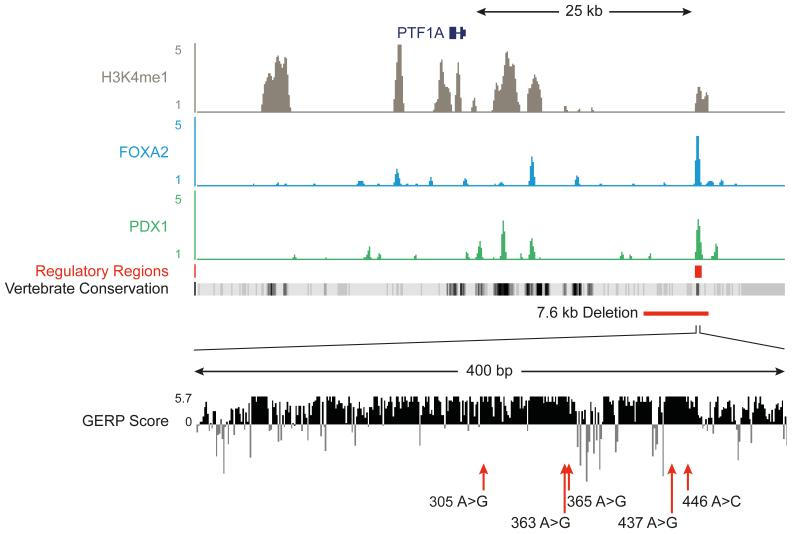 Epigenome annotation of variants from genome sequencing identifies a shared variant in a putative enhancer element Variant identified by whole genome sequencing, plus an additional five variants in patients with pancreatic agenesis map to a 25 Kb region downstream of PTF1A , which contains a single candidate pancreatic progenitor-specific enhancer within a highly conserved 400bp element. The top panel depicts ChIP-seq density plots for the enhancer mark <t>H3K4me1,</t> the second and third show occupancy for FOXA2 and PDX1. A broad panel of embryonic and adult human tissues do not show active chromatin marks in this region ( Supplementary Figure 5 ). Vertebrate Conservation and mammalian conservation tracks (as measured by the GERP Score) tracks illustrate the high conservation of this element. The red line depicts the approximate location of a 7.6 kb deletion in this region, and red arrows indicate point mutations, using the final 3 digits from the hg19 coordinates as labels (referring to positions 23508305A > G, 23508363A > G, 23508365A > G, 23508437A > G and 23508446A > C on chromosome 10 respectively).