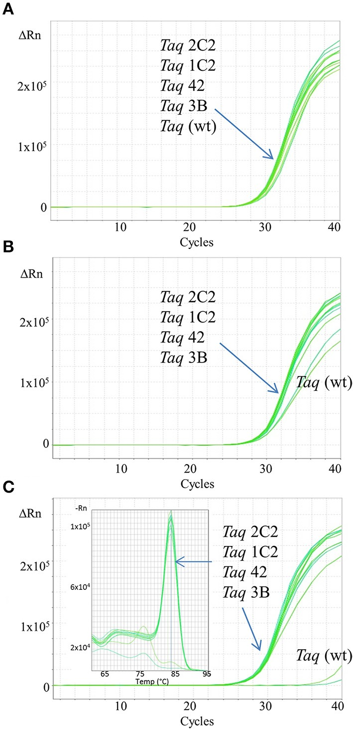 Fast qPCR assays employing SYBR Green. Genomic DNA targets were amplified as described in Methods using 0.5 ng human gDNA and 10 ng of purified wild-type or mutant Taq DNA polymerase. Reactions were cycled on the <t>StepOnePlus</t> instrument (Life Technologies) using cycling conditions consisting of 3 min at 95°C followed by 40 cycles of 3 s at 95°C, 10 s at 60°C. Genomic DNA targets are as follows: (A) 91 bp ABC, (B) 109 bp COMTE2, (C) 305 bp Numb. Sixty second extension time is required for Taq wild-type to efficiently amplify the 305 bp target (data not shown).