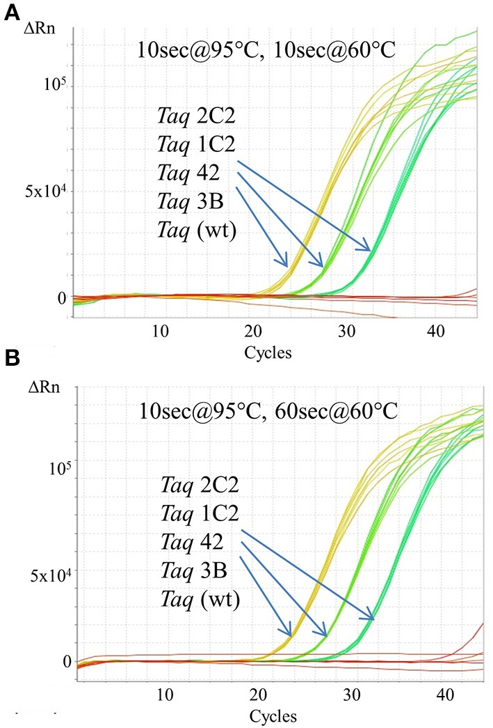 Fast cycling with TaqMan detection. An Assays-on-Demand assay (Life Technologies; 171 bp β-actin target) was performed using 50, 5, 0.5 ng human genomic DNA and 10 ng of purified wild-type or mutant Taq DNA polymerase. Reactions were cycled on the StepOnePlus instrument using cycling conditions consisting of 2 min at 95°C followed by 40 cycles of: (A) 10 s at 95°C, 60 s at 60°C; or (B) 10 s at 95°C, 10 s at 60°C.