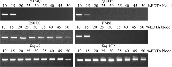 Amplification directly from blood. A 322 bp IGF target was amplified from 5 to 25 μl EDTA-blood using 50 ng of each mutant <t>Taq</t> <t>DNA</t> polymerase. Reactions were cycled on the SureCycler 8800 using the following parameters: 5 min at 90°C, followed by 30 cycles of 30 s at 95°C, 30 s at 60°C, 60 s at 72°C. Wild-type Taq can amplify the 322 bp from human genomic DNA in the absence of blood, but not in the presence of 1% blood (data not shown), even though the amount of EDTA introduced with 0.5 μl EDTA-blood (0.089 mM EDTA) is well below inhibitory levels.