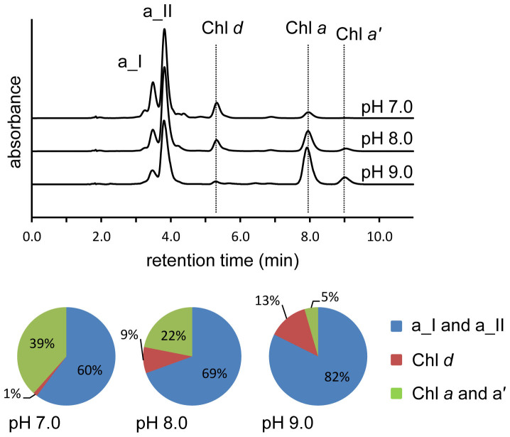 pH dependence of Chl d chemical synthesis from Chl a . Chromatograms (spectrum maximum plots) of detergent solubilised Chl a reacted with β-mercaptoethanol and heme in a 50 mM Tris buffer at the indicated pH. Unreacted Chl a , Chl d and 3 1 -sulfoxide of β-mercaptoethanol derivatives (a_I and a_II) are marked. Proportions of the major products and remaining Chl a and Chl a ' (the C13 2 -Chl a epimer) are indicated in the pie charts for each pH tested.