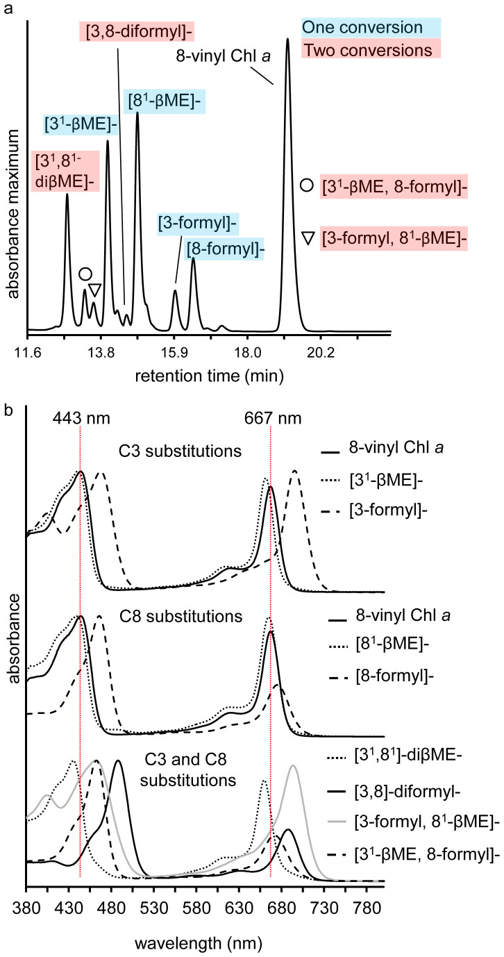 RP-HPLC chromatogram and online absorption spectra of 8-vinyl Chl a formyl and sulfoxide of β-mercaptoethanol derivatives. (a) RP-HPLC spectrum maximum plot of an incomplete 8-vinyl Chl a reaction after 2 h. Products with either a C3 or C8 conversion (one conversion) are marked in blue, and those products where both the C3 and C8 vinyl have reacted (two conversions) are marked with red. (b) Online spectra of 8-vinyl Chl a and the major formyl and sulfoxide of β-mercaptoethanol derivatives. The Soret and Q y maxima of 8-vinyl Chl a are marked with vertical red lines. Spectra are arithmetically shifted for clarity. βME, sulfoxide of β-mercaptoethanol.