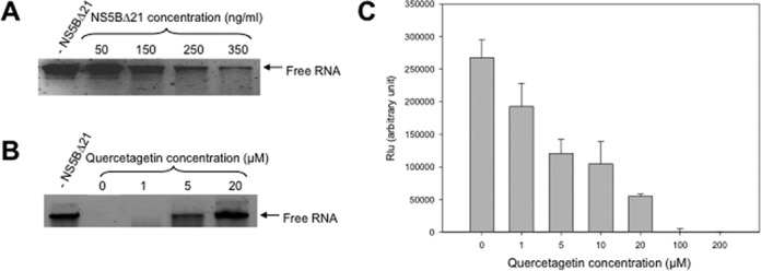 (A) RNA binding assay with increasing concentrations of HCV-NS5BΔ21 incubated 30 min with 1 μg of RNA, then loaded onto a non-denaturing agarose gel. (B) RNA binding assay with 500 ng/ml of HCV-NS5BΔ21 incubated 30 min with 1 μg of RNA in the presence of increasing concentrations of quercetagetin, then loaded onto a non-denaturing agarose gel. The control contained no HCV-NS5BΔ21. (C) Dose-dependent inhibition of RNA binding to HCV-RdRp by quercetagetin in a quantitative HCV-NS5BΔ21-RNA ELISA assay.