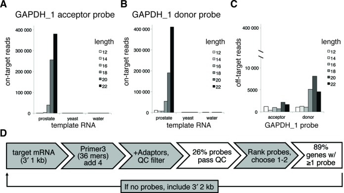 Probe length analysis and design pipeline. ( A ) and ( B ) Independent probe sets targeting GAPDH and M13 were synthesized as both donor and acceptor oligos ranging in target sequence length from 12 to 22 nucleotides; the junction between acceptor and donor probes was kept constant. These oligos were pooled such that the total concentration of each pooled probe set was 5 nM in the final RASL-seq assay. The lengths of correctly (on target) ligated donor or acceptor probes were determined by deep sequencing, and each length's contribution to the total number of observed read counts was tabulated. Data from the GAPDH_1 probe sets are shown when prostate RNA, yeast RNA or no template was included in the assay. ( C ) The contribution of each probe length to off-target ligations (defined as inappropriate ligation between different probe sets) is shown for the prostate RNA template condition. The scale is different because the off-target ligations are relatively rare compared to the on-target ligations. ( D ) The probe design pipeline takes the 1 kb 3′-sequence upstream of the poly(A) and uses Primer3 to generate candidate 36 nt RASL probe sequences (reverse complement of mRNA sense strand). After extension of 4 nt in the poly(A) direction, splitting of the 40mer into acceptor and donor, and appending of appropriate adapters, the properties of the adaptor-appended probe oligos are calculated. Probes are then filtered through a quality control (QC) step ('Materials and Methods' section), which removes ∼75% of the candidates (based on analysis of 1000 transcripts). Successfully filtered probes are finally ranked by a combination of proximity to poly(A) and Primer3 penalty (based on the original 36 nt candidate probe), such that the best probe sets can be selected for production. Gray boxes denote processes and white boxes denote the outcomes.