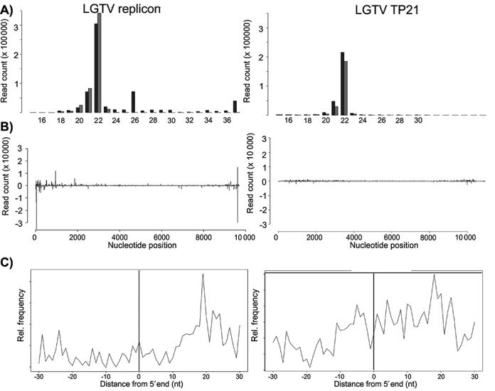 Characterization of exogenous-derived small RNAs in IDE8 cells. ( A ) Size distribution of small RNA molecules mapping either to LGTV E5repRluc2B/3 replicon (left panel) at 48 hpt or LGTV TP21 (right panel) at 72 hpi in IDE8 cells. ( B ) Frequency distribution of 22 nt small RNA molecules mapped to the E5repRluc 2B/3 replicon (5′UTR to 3′UTR) (left panel) or LGTV TP21 (right panel). The y-axis shows the frequency of the 22 nt siRNAs mapping to the corresponding nucleotide position in the x-axis. Positive numbers and dark gray peaks represent the frequency of siRNAs mapping to the genome (in 5′-3′ orientation) and light gray peaks/negative numbers to the antigenome (in 3′-5′ orientation). See also Supplementary Figure S2. ( C ) Frequency map of 22 nt small RNAs mapping to the opposite strand of the LGTV replicon (left panel) or LGTV TP21 (right panel).