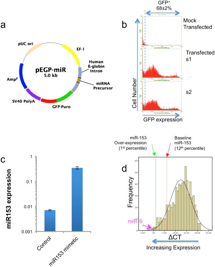 Identification and gene ontology classification of mRNAs that are down-regulated following miR-153 over-expression. (a) Schematic structure of the pre-miR-153/GFP-puromycin expression vector (Cell Biolabs, CA). (b) Sample flow-cytometry frequency histograms documenting transfection efficiency. The upper panel depicts mock-transfected controls, whereas the lower two panels (s1 and s2) show GFP expression following transfection. GFP-transfected cells exhibit a bi-modal distribution, with a mean transfection efficiency of 68±2%. Cells were cultured for 24 hours before labeling with anti-GFP antibody, followed by flow cytometry. (c) Bar graph shows that transfection of neurosphere-derived cells with pre-miR-153 expression vector results in a 30-fold increase in miR-153 expression compared to transfection with vector control. Data from six independent replicates (n = 6) are expressed as mean±SEM. (d) Frequency histogram of miRNA expression (ΔCT relative to U6 snRNA) in neurosphere cultures showing the relative baseline and transfection-induced expression of miR-153. Smaller ΔCT values indicate increased expression. Data show that baseline miR-153 expression is within the upper 12th percentile of all expressed miRNAs, and that over-expression results in a shift to the 1st percentile. However, another ethanol-sensitive miRNA, miR-9 (indicated with arrow), is expressed at a higher baseline level compared to miR-153 over-expression.