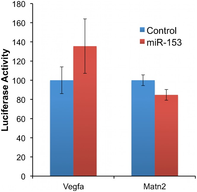 Matn2 and Vegfa are not direct targets of miR-153. Firefly activity relative to RLuc luciferase activity was measured in NSCs 24 hours after transfection with control or miR-153 mimetics and the luciferase construct containing 3′UTR of Matn2 or Vegfa. Bars are normalized to the relative firefly units of samples treated with the transfected control. The x -axis depicts treatment conditions (control or miR-153). The y -axis indicates normalized luciferase activity. Data were expressed as mean ± SEM (n = 5).