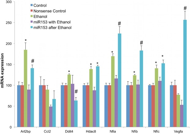 MiR-153 prevents and partly reverses ethanol's effects on miR-153-regulated gene transcripts. Bar graphs represent real-time RT-PCR analysis for mRNA expression of miR-153 sensitive genes in control neurosphere cultures (untreated or transfection control), ethanol (320 mg/dl) alone, miR-153 over-expression with ethanol exposure (prevention paradigm), or miR-153 over-expression for 48 hours after 5 days of ethanol exposure (reversal paradigm) of NSCs. The y -axis indicates normalized mRNA expression (normalized to 18s) relative to control samples. Data were expressed as mean±SEM. n = 4 independent experiments. *Significant difference from control. #Significant difference from ethanol-exposed. See Results section for p-values.