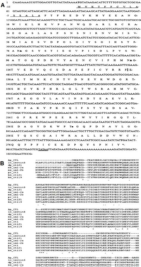 Sequence analysis and alignment of the cDNA cloning of A. pernyi CTL ( Ap -CTL). (A) The numbers of nucleotide and deduced amino acid sequences (one-letter symbols) are shown on the left of the nucleotide sequence, respectively. The predicted signal peptide were assigned negative numbers and underlined. The start codon ATG is shown in bold and the termination cordon (TGA) is marked with an asterisk (*). Two potential N-linked glycosylation sites and one O-linked glycosylation site are marked with ▲ and ■, respectively. The putative polyadenylation sequence, TATAA, is double underlined and the two CRDs are divided by