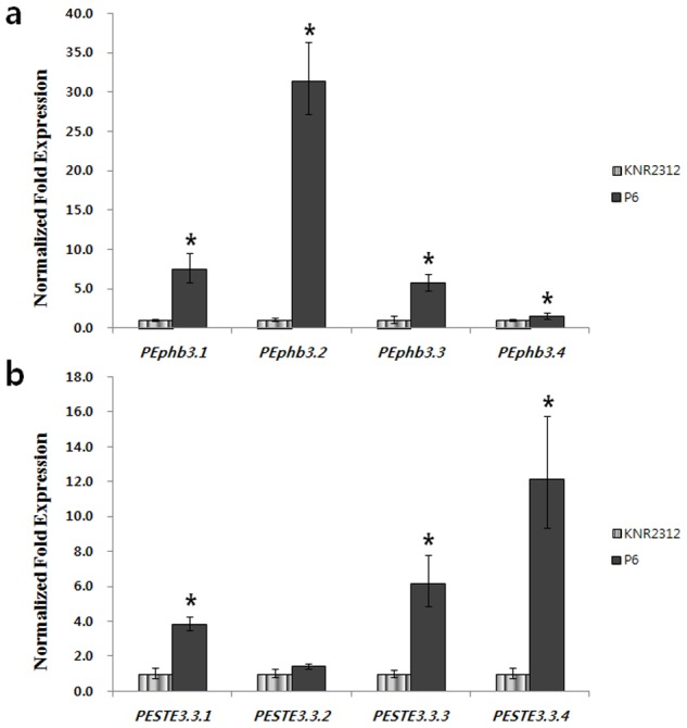 Relative expression of P. eryngii KNR2312 receptors (a) and pheromones (b) in the monokaryon (P6) and dikaryon (KNR2312), as determined by real-time <t>qRT-PCR.</t> Gene expression was normalized to 18S rRNA expression and calibrated to the value for the monokaryon (P6), which was assigned a value of 1, by the standard curve method (Bio-Rad). All assays were performed in triplicate. The error bars show the standard deviations for triplicate samples.