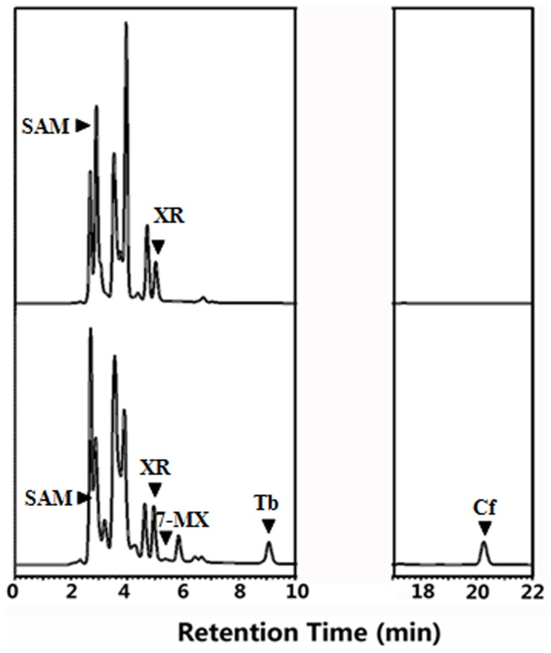HPLC analysis after co-expression in E. coli of recombinant CaXMT1 andTCS1 by using pMAL-c5X vector instead of <t>pGEX-4t-2.</t> The top trace shows the negative control and the bottom trace shows the products of the sample enzymatic reaction. XR is substrate and SAM is added into the reaction as methyl donor.
