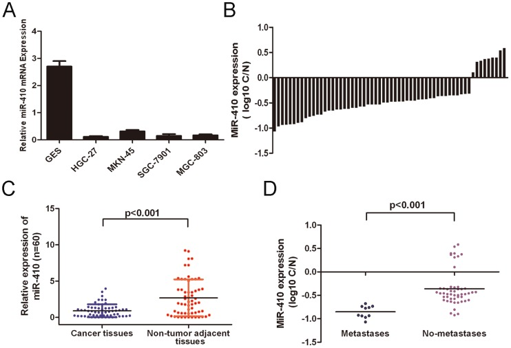 miR-410 was downregulated in gastric cancer. A. qRT-PCR analysis of miR-410 expression in four cell lines derived from gastric cancer and one nonmalignant gastric cell line (GES). (B) qRT-PCR analysis of miR-410 expression in 60 pairs GC tissues and their corresponding adjacent nontumorous tissues. The expression of miR-410 was normalized to U6 snRNA. (C) Relative miR-410 expression levels in GC tissues and adjacent normal regions; (D) Statistical analysis of the association between miRNA level between pM stage (No metastasis and Metastasis, respectively); *p