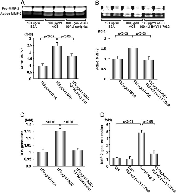 MMP-2 activity and gene expression, and intracellular ROS generation in RPTCs. (A, B) RPTCs were stimulated with 100 μg/ml AGE-BSA or non-glycated BSA with or without 10 -7 M ramiprilat or 100 nM BAY11-7082 for 48 hr, and MMP-2 activity in the supernatant was determined by gelatin zymography (n = 4). (C) Intracellular ROS generation in RPTCs. Cells were stimulated with 100 μg/ml AGE-BSA or BSA with or without 10 -7 M ramiprilat for 24 hr, then the intracellular ROS generation in RPTCs was evaluated using fluorescent probe 10 μM CM-H 2 DCFDA. (D) Effects of Ang II on MMP-2 gene expression in RPTCs. The cells were stimulated with 10 -6 M Ang II with or without 100 nM BAY11-7082 for 24 hr and MMP-2 gene expression was evaluated by quantitative real-time RT-PCR (n = 6). Data are shown as mean ± SEM.