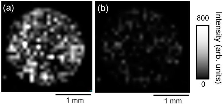 Ion image of ( a ) m / z 829.5 [D + Na] + ; and ( b ) m / z 563.3 [P + H] + obtained from PC-3 cells administered 50 μM docetaxel and 10 μM protoporphyrin IX (PpIX) using the zeolite matrix, ATT/NaY with the droplet method.