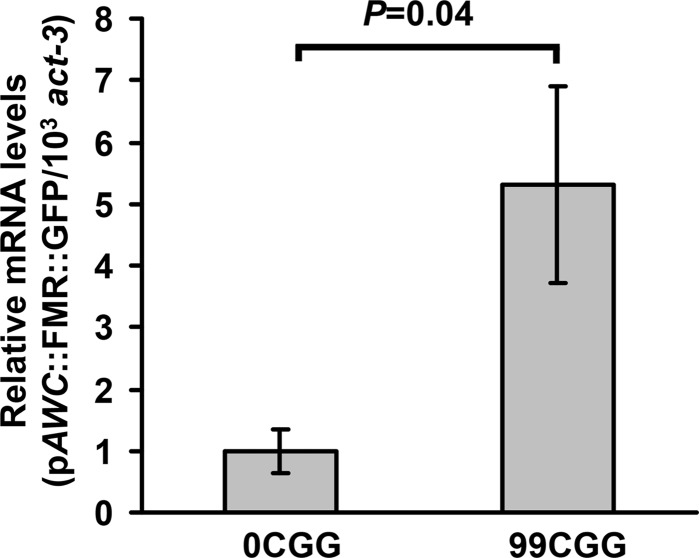 The 5′UTR CGG repeat causes a significant increase in mRNA level. Total RNA from adult transgenic animals was extracted, reverse-transcribed into cDNA, and quantified by real-time PCR. GFP mRNA expression was increased ∼5-fold in animals expressing p AWC ::FMR(CGG) 99 ::GFP compared with control (0CGG) animals, which was set to 1. (Error bars: SEM.) The data were collected from four independently isolated populations of animals.