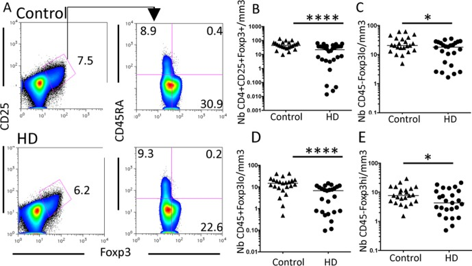 Global Foxp3 + T cell numbers are reduced in HD patients. (A) Representative FACS analysis of CD4 + CD25 + Foxp3 + T cells and their distinct subsets on PBMC from control (top) and HD patients (bottom). (B) CD4 + CD25 + Foxp3 + T cell numbers are reduced in HD patients. (C to E) Among these gated cells, cytokine-secreting CD45RA − Foxp3 lo nonsuppressive (C), resting suppressive CD45RA + Foxp3 lo (D) and activated suppressive CD45RA − Foxp3 hi (E) cells, all these subsets are reduced in HD patients compared to controls. Bars represent the median. *, P