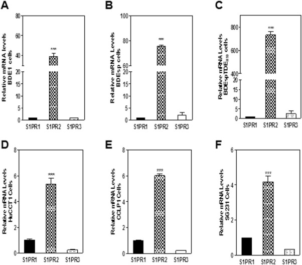 Differential expression of S1PRs in CCA cells. Total cellular RNA was isolated from (A) rat BDE1, (B) rat BDEsp, (C) rat BDEsp-TDE H10, (D) human HuCCT1, (E) CCLP1, and (F) SG231cells. mRNA levels of individual S1PRs were detected by real-time RT-PCR, as described in Materials and Methods, and normalized using β-actin or GAPDH as an internal control. Relative mRNA levels of S1PR2 and S1PR3 to S1PR1 (designated = 1) are shown. *** P