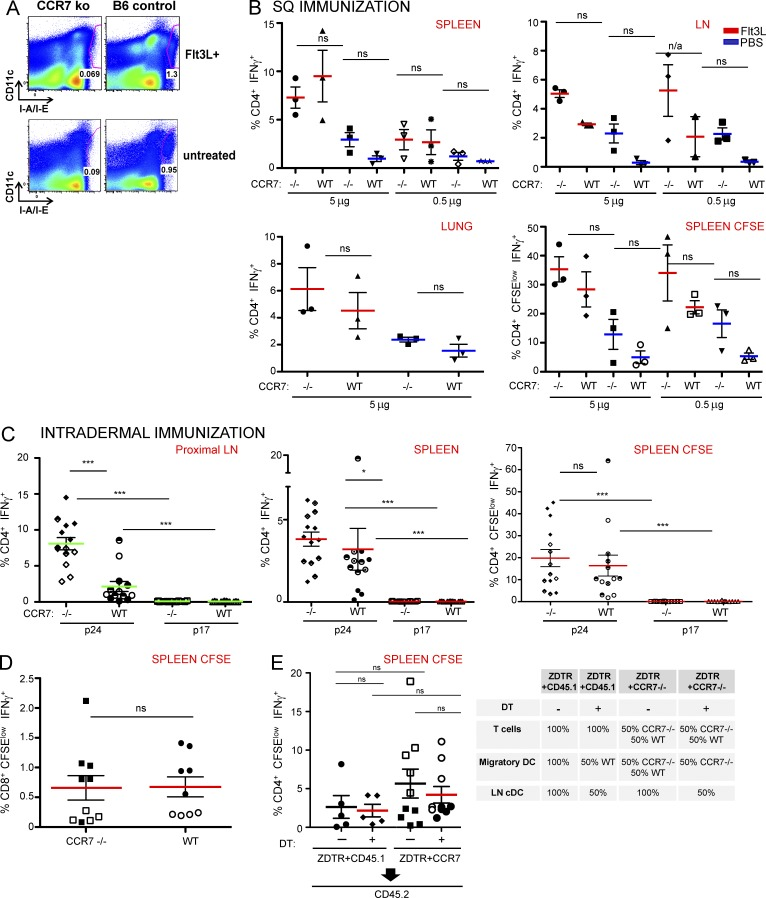 Blockade of migratory DCs does not impair immunity after s.c. or i.d. protein immunization. (A) Representative gating of inguinal LN taken from CCR7 −/− and Flt3L-treated and untreated vaccine mice. (B) CCR7 −/− mice versus B6 controls were immunized with 5 or 0.5 µg of αCD205 gag-p24 in separate experiments ( n = 3 mice per group). Error bars show mean ± SEM. *, P ≤ 0.05; **, P ≤ 0.01; ***, P ≤ 0.001. Red, Flt3L treated; blue, PBS treated. Intracellular cytokine staining for spleen, LN, and lung parenchyma and CFSE dilution of splenocytes after 4 d in culture with p24. (C) i.d. immunization with 0.5 µg αCD205 gag-p24: proximal draining LN and spleen intracellular cytokine staining and CFSE dilution of splenocytes after 4 d in culture with p24. Pooled from 3 independent experiments of n = 5 mice per group. Error bars show mean ± SEM. *, P ≤ 0.05; **, P ≤ 0.01; ***, P ≤ 0.001). (D) CD8 + CFSE divided IFN-γ T cells after DEC-OVA SQ immunization. Pooled from 2 experiments, n = 4–5 mice per group. Error bars show mean ± SEM. *, P ≤ 0.05; **, P ≤ 0.01; ***, P ≤ 0.001. (E) Mixed bone marrow chimera after SQ immunization with 0.5 µg αCD205 gag-p24 in the presence or absence of DT, CFSE dilution shown. Pooled from 2 independent experiments with n = 4–5 mice per group for CCR7 + ZDTR chimeras compared plus and minus DT; n = 1 experiment for 5 mice per group for CCR7 + CD45.1 plus and minus DT controls. Error bars show mean ± SEM. *, P ≤ 0.05; **, P ≤ 0.01; ***, P ≤ 0.001.