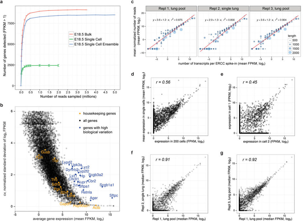 Assessment of required sequencing depth, technical and biological variation, dynamic range and reproducibility of single cell <t>RNA-seq</t> data of 80 single distal lung epithelial cells at E18.5 (a) Saturation analysis reveals the sequencing depth required for the detection of most genes expressed by single cells. To detect most expressed genes, single cell RNA-seq libraries have to be sequenced only to a depth of about 1 million reads, whereas libraries of bulk samples have to be sequenced deeper. The number of genes detected in the ensemble of all single cells (synthetic bulk) is comparable to the number of genes detected in the true bulk experiment. Each point on the saturation curve was generated by randomly selecting a number of raw reads from each sample library (bulk: 200 cell bulk library, single cell: single cell RNA-seq libraries of 80 lung epithelial cells, single cell ensemble: bioinformatically pooled single cell libraries) and then using the same alignment pipeline to call genes with mean FPKM > 1. Each point represents four replicate sub-samplings, error bars represent standard errors. (b) Technical noise and biological variation in single cell RNA-seq data. Relationship between mean expression level and coefficient of variation for 10,946 genes in single embryonic lung epithelial cells. Several genes exhibit strong biological variation (blue), as they exhibit higher variability than the average noise at a given average gene expression. Housekeeping genes are shown in yellow. (c) Average detected transcript levels (mean FPKM, log 2 ) for 92 <t>ERCC</t> RNA spike-ins as a function of provided number of molecules per lysis reaction for each of the three independent single cell RNA-seq experiments performed at E18.5. Linear regression fits through data points are shown. The length of each ERCC RNA spike-in transcript is encoded in the size and color of the data points. No particular bias towards the detection of shorter versus longer transcripts is obs