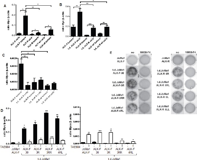 Myc expression is strongly enhanced in orthotopic tumors and in tumor-derived cell lines, and plays a strong oncogenic role in vitro A. Myc mRNA expression levels measured by semi-quantitative real-time qPCR in parental JoMa1 cells and in orthotopic tumors. Five representative samples were analyzed for JoMa1-ALK-F, and JoMa1-ALK-R tumors; 4 for JoMa1-ALK-wt tumors, t.d.JoMa1-ALK-F, and t.d.JoMa1-ALK-R cell lines; and 3 for t.d.JoMa1-ALK-wt cell line. To note: the exogenous Myc-ER T is from human origin and was not detected by the murin Myc specific primers used. Mean ratio between Myc and β-actin as measured in three independent experiments are indicated (*=p
