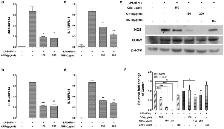 RR-ARFs inhibit LPS/IFN-γ-mediated iNOS, COX-2, IL-1β and IL-6 expressions in RAW264.7 cells. Cells were incubated with different extracts of RR and LPS/IFN-γ for 16 h respectively at concentrations indicated. The expressions of mRNA for iNOS (a), COX-2 (b), IL-1β (c) and IL-6 (d) were analyzed by real-time PCR normalized to RPL14 mRNA. iNOS (130 kDa) and COX-2 (73 kDa) protein levels (e) were examined using Western blot. β-actin was used as an internal loading control. The full-length blots with anti-iNOS, anti-COX-2 and anti-β-actin antibodies were presented in supplementary Figure S1 . All gels have been run simultaneously under the same experimental conditions. Cell culture experiments were performed at least three times. The relative fold changes of iNOS and COX-2 protein were compared with LPS/IFN-γ control (f). Values are expressed as the means ± SD of at least three independent experiments. * P