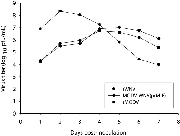 Comparison of the replication kinetics of MODV-WNV(prM-E), MODV and WNV in Vero cells. Subconfluent monolayers of Vero cells were inoculated with MODV-WNV(prM-E), MODV and WNV at a m.o.i of 0.1. Supernatants were collected daily for 7 days and tested by plaque assay. MODV-WNV(prM-E) had been passaged once in BHK-21 cells and once in Vero cells prior to the experiments.