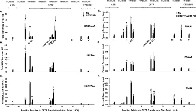 Depletion of architectural proteins alters histone modifications and transcription factor occupancy. ( A )–( C ) ChIP for H3K9me3 (A), H3K9ac (B) and H3K27ac (C) in Caco2 cells transfected with NC siRNA (gray) or a siRNA targeting CTCF (black). Data are shown as percent recovery over input and each histone modification is normalized to recovery over input of unmodified histone H3 at each site, n = 3. ∧ indicate sites that are statistically different after knockdown as determined by an unpaired, two-tailed Student's t -test, P -values are listed in Supplementary Table S2. Other sites of interest are marked with arrows. ( D )–( F ) ChIP for FOXA1 (D), FOXA2 (E) and <t>CDX2</t> (F) in Caco2 cells transfected with NC siRNA (gray) or siRNAs targeting CTCF and RAD21 (black). Data are shown as percent recovery over input, n = 3. * P