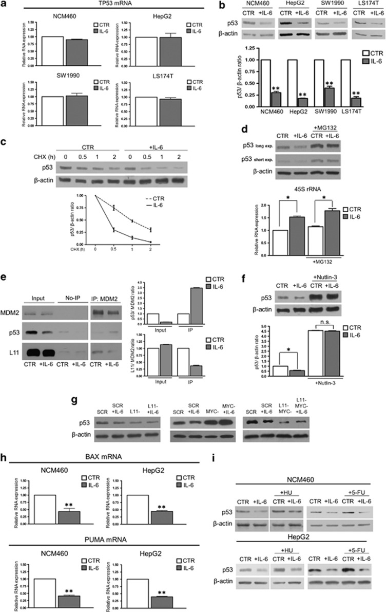 Stimulation of rRNA transcription by <t>IL-6</t> downregulates p53 expression and activity. ( a ) Real-time–PCR evaluation of the TP53 mRNA expression in NCM460, HepG2, SW1990 and LS174T cells after 24 h of IL-6 treatment. ( b ) Representative western blot and densitometric analysis of p53 expression in NCM460, HepG2, SW1990 and LS174T cells treated with IL-6 for 24 h. ( c ) Representative western blot and time-course analysis of p53 protein expression in control and 24 h IL-6-stimulated HepG2 cells, exposed to cycloheximide (CHX) at a concentration of 20 μg/ml. The values relative to p53 expression at 0.5, 1 and 2 h of CHX treatment are significantly higher in control than in IL-6-exposed cells ( P