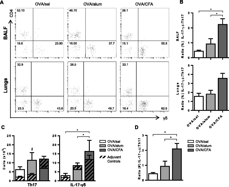 OVA/CFA sensitized mice have more γδ + IL-17 + T cells in the BAL fluid. BAL fluid cells were stimulated with PMA/ionomycin and triple stained with α-CD4, α-γδ TCR and α-IL-17 antibodies. (A) Representative flow cytometry plots of cells in BAL fluid (top panel) and lung (bottom panel) gated first to identify IL-17 + cells and subsequently to identify frequencies of CD4 and γδ T cells. (B) The frequency distribution of IL-17 + cells within the CD4 and γδ T cell populations is presented as the ratio (γδ/CD4) of these cells. One-way ANOVA, Holm-Sidak. (C) Total numbers of CD4 + IL-17 + and γδ + IL-17 + populations calculated from the frequency of these cells and the total cell counts are shown. Two-way ANOVA, Holm-Sidak. (D) The distribution of total γδ + IL-17 + and CD4 + IL-17 + T cells is presented as the ratio (γδ/CD4) of these cells. One-way ANOVA, Holm Sidak. (B-D) Data are from 7–11 total mice per group from at least 2 independent experiments. *p