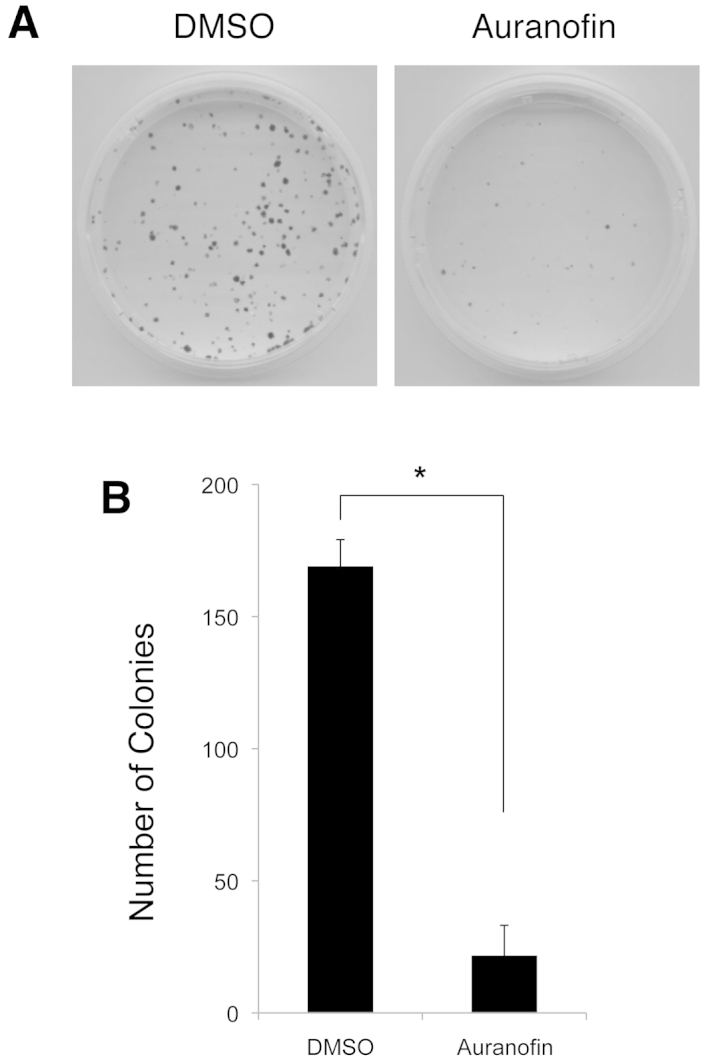 Auranofin suppresses the colony-forming ability of SKOV3 cells. The colony numbers were determined by the colony formation assay. (A) SKOV3 cells (500 cells/plate) were treated with auranofin (100 nM) or the control (DMSO) for 7 days and stained with crystal violet solution. The representative images of the assays are shown. (B) The numbers of colonies in the auranofin-treated plates were compared with those of the controltreated plates. The results are the mean ± SEM numbers of cell colonies of three replicates. * P