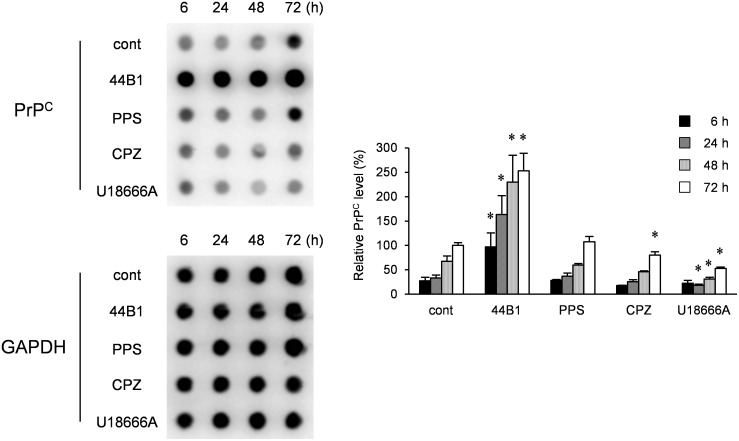Influence of anti-prion compounds on PrP C levels. N2a-3 cells were cultured with an anti-prion compound at the EC 65 (mAb 44B1, 0.4 µg/ml; PPS, 0.1 µg/ml; CPZ, 10 µM; U18666A, 5 µM) for 6–72 h and subjected to dot-blotting for the detection of PrP C or GAPDH for endogenous control. Representative dot-blot images are shown on the left, and the graph on the right shows the PrP C levels relative to that of 72-h mock-treated cells. The means and SDs of three independent experiments are depicted. Asterisks indicate a significant difference between the cells treated with each anti-prion compound and mock-treated control cells at the same time point (Student's t- test, p