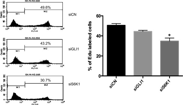 S6K1 and GLI1 knockdown reduces SK-N-AS cellular proliferation. SK-N-AS cells, cultured for 48 hours following transfection with control (siCN), GLI1 (siGLI1) or S6K1 (siS6K1) siRNAs, were subjected to the EdU incorporation assay for 4 hours. The percentage of cells labeled with Alexa Fluor 488 azide was detected by flow cytometry. The data were analyzed with the one-way ANOVA test followed by Tukey's multiple comparison using the GraphPad Prism software. Each bar represents the mean ± SEM of three independent experiments. *, Statistical significant, P