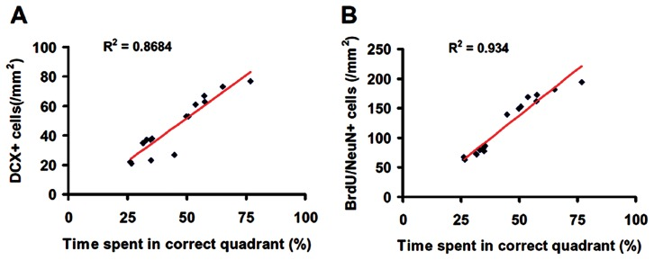 Correlation of the number of neuroblasts (A), and newborn neurons (B) with spatial learning. The line graph shows that spatial learning is significantly correlated with the number of DCX-positive cells (A) and to the number of newborn mature neurons (B) in the DG of the ipsilateral hippocampus in rats examined at 35 days after TBI and tPA treatment ( p