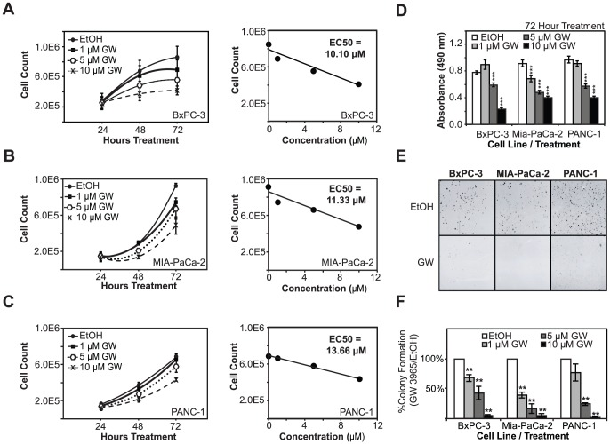 LXR agonists block cell proliferation and colony-formation in pancreatic cancer cells. A, B, C, PDAC cells (BxPC-3, Mia-PaCa-2, and PANC-1 cell lines, respectively) show dose-dependent decreases in cell proliferation upon treatment with increasing GW3965 concentrations. EC50 calculations indicate that BxPC-3 and Mia-PaCa-2 cells are more sensitive to ligand treatment than PANC-1 cells. D, Results from MTS assays, a separate measure of overall cell metabolic rate and indirect measurement of cell proliferation, demonstrate a dose-dependent drop in overall metabolism in cells treated with increasing concentrations of GW3965. E, Colony-formation ability in all three cell lines was blocked by GW3965 treatment. F, Colony formation of GW3965 treated cells was quantified relative to vehicle-treated controls. Asterisks indicated statistically significant changes.