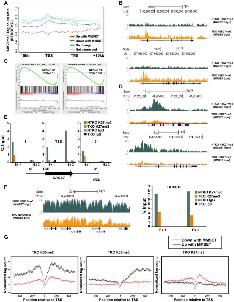 MMSET alters genome-wide patterns of H3K27me3 methylation. (A) Tag density profile of H3K27me3 distribution across different gene groups from Figure 2A . The ratio between read numbers in NTKO and TKO cells is presented on the y-axis. (B) UCSC genome browser display of H3K27me3 density tracks surrounding the transcription start site of two MMSET activated genes, CA2 (top) and CR2 (bottom). (C) GSEA analysis of genes upregulated by MMSET shows enrichment of previously identified EZH2 target genes. (D) UCSC genome browser display of H3K27me3 density tracks surrounding the transcription start site of two MMSET repressed genes, DLL4 (top) and CDCA7 (bottom). (E) ChIP-qPCR for H3K27me3 on CDCA7 locus. Methylation enrichment was tested on the promoter (TSS) and on the regions upstream (5′) and downstream (3′) from the TSS. Two independent biological replicates are shown. (F) UCSC genome browser of H3K27me3 enrichment on non-expressed genes of the HOXC cluster (left) and ChIP-qPCR for H3K27me3 on the HOXC10 locus (right). Two independent biological replicates are shown. (G) Tag density profile of H3K36me2 (left), H3K36me3 (middle) and H3K27me3 (right) distribution of differentially expressed genes in TKO cells.