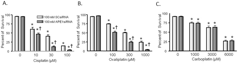 Reducing the expression of APE1 augments the ability of cisplatin and oxaliplatin, but not carboplatin to reduce cell viability in sensory neuronal cultures. Neuronal cultures were treated with siRNAs on days 3–5 in culture then exposed to various concentrations of platins for 72 hours starting on day nine in culture. Cell viability as measured by trypan blue exclusion was determined on day 12 in culture from three independent harvests. Each column represents the mean ± SEM of percent survival of cells from cultures treated with scrambled siRNA (SCsiRNA; lightly shaded columns) or with APE1si RNA (heavy shaded columns), then exposed to various concentrations of cisplatin (panel A), oxaliplatin (panel B), or carboplatin (panel C) as indicated. An asterisk indicates significant difference in survival in the absence or presence of drug treatment, whereas a cross indicates significant difference in cultures treated with SCsiRNA versus APE1siRNA using ANOVA and Tukey's post hoc test.